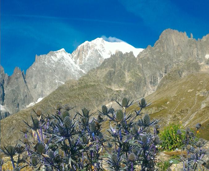 Giardino-botanico-monte-bianco