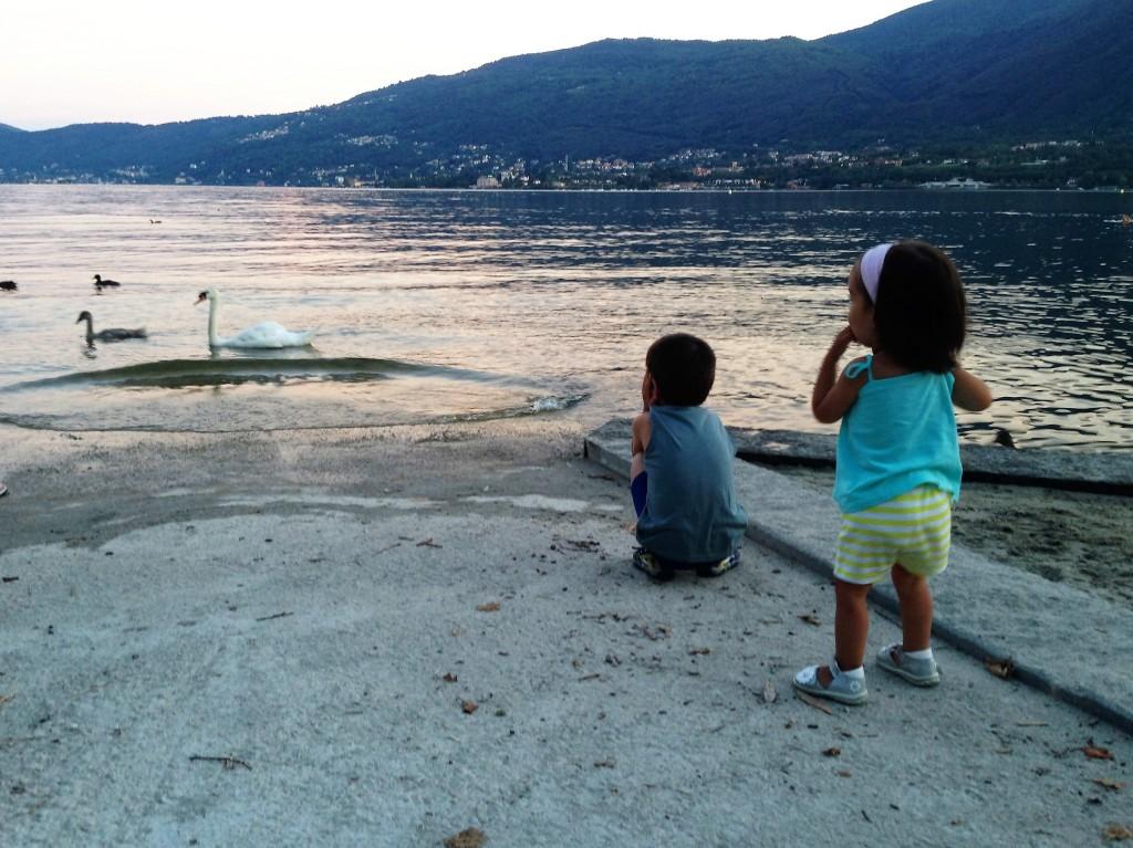 lago-maggiore-bambini-cigni