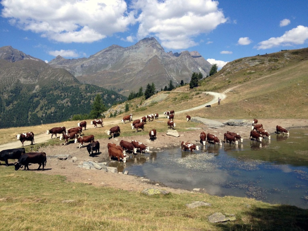 Lago_delle_Rane_1200