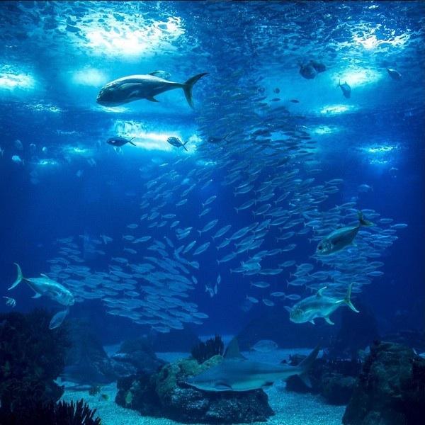 lisbona-oceanario