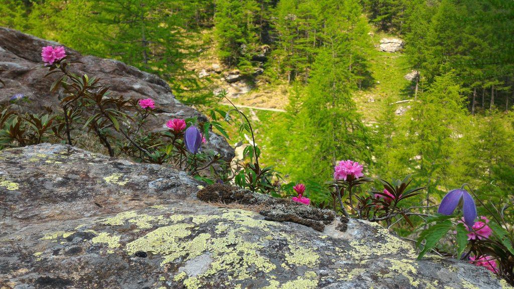 natura montagna estate