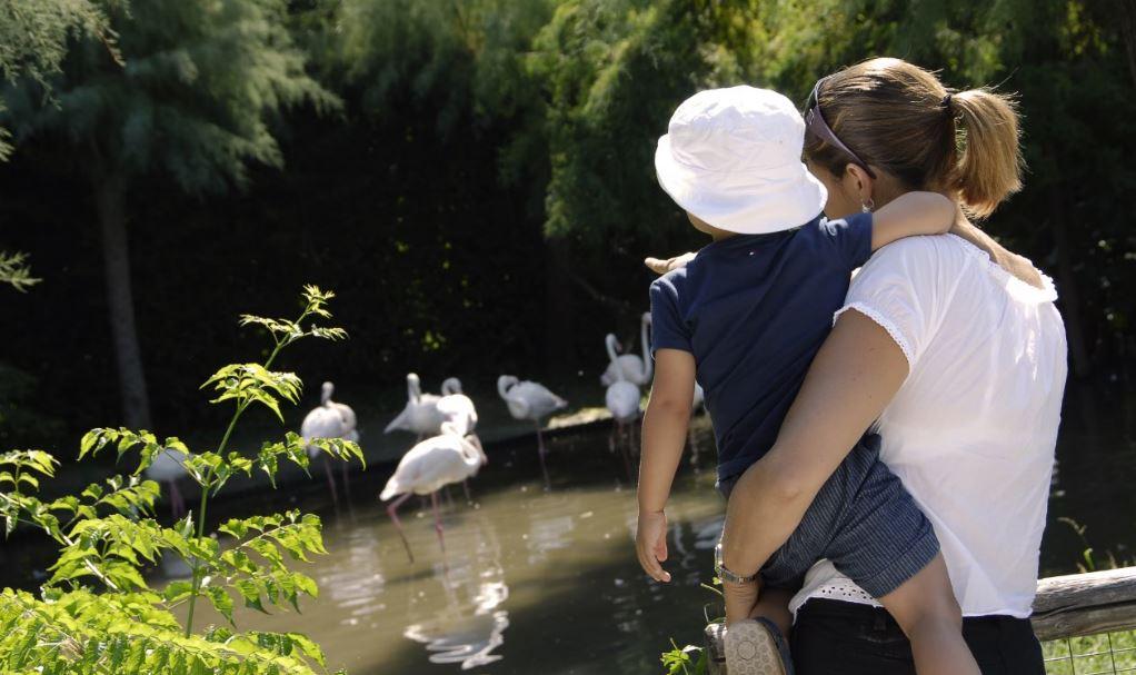 parco-zoo-lignano-2