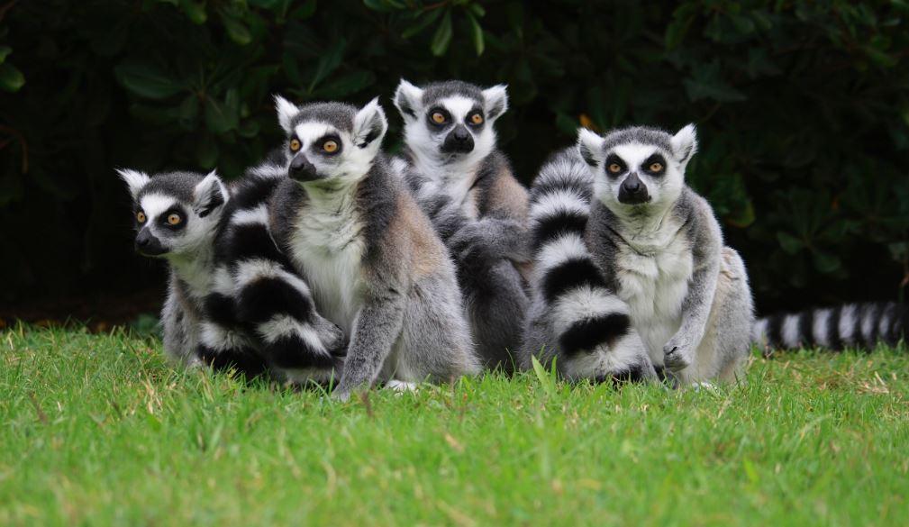 parco-zoo-lignano