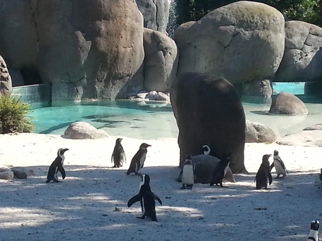 pinguini-zoom